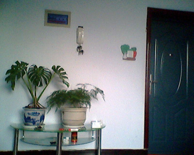 如何选择养花品种美化室内环境 齐家论坛 装修 建材 家具 婚庆 家居 团高清图片